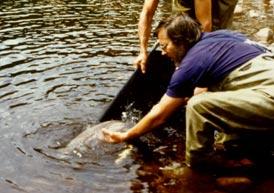 Source: http://www.parcparcours.com/jacques-cartier/fiches/saumon.html