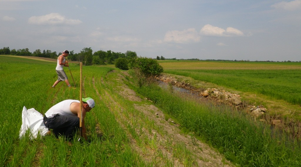 La plantation en bande riveraine... un bel exemple d'action!
