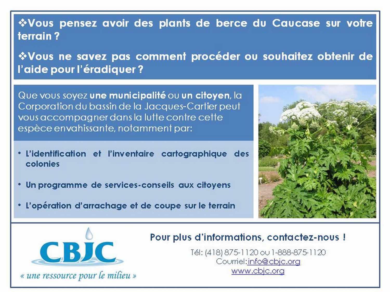 berce-du-caucase_C